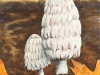 Shaggy Manes