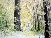 forest-spring